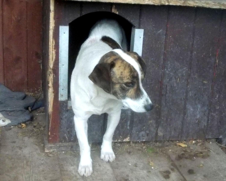 pies znaleziony w miejscowości Wróblowice