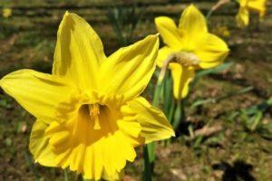 """Zakwitły ,,Kwiaty dla Bohaterów"""" [ZDJĘCIA]"""